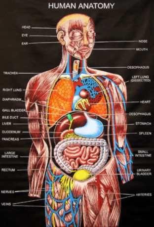 human anatomy   nursing   Pinterest   Human anatomy, Anatomy and Medical