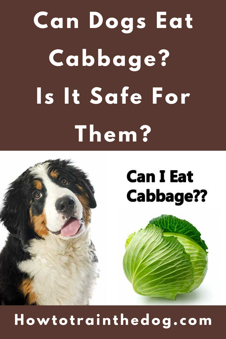 Can Dogs Eat Cabbage Is It Safe For Them In 2021 Can Dogs Eat Dog Eating Dog Nutrition