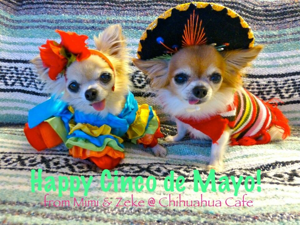 Not Everyone In The Family Was Happy About Cinco De Mayo