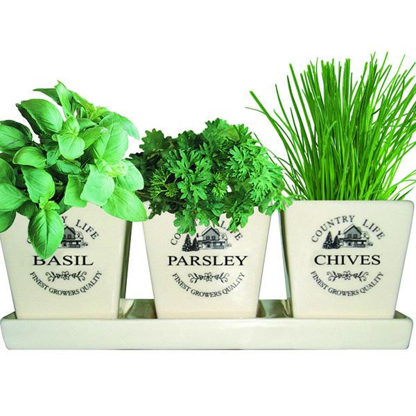 Herb Pots For Windowsill Ceramic Windowsill Herb Gift Set 400 x 300