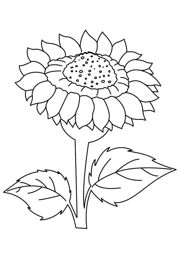 Print Coloring Image Momjunction Sunflower Coloring Pages Flower Coloring Pages Sunflower Colors