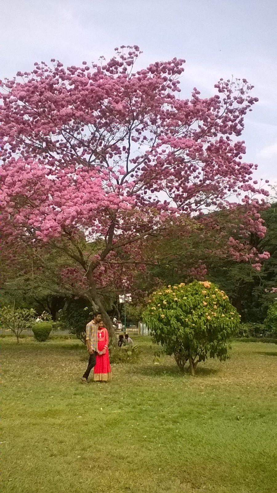 The Cubbon Park Of Bangalore Karnataka India The Park Houses Buildings That Are Aesthetically Designed Magnificent Statues Park Homes Bamboo Tree Landscape