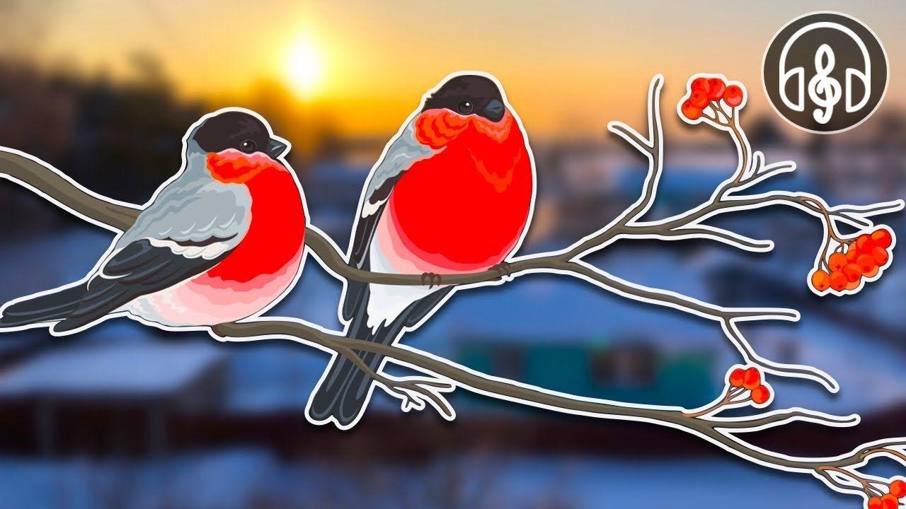 Звуки природы. Шум зимы и пение птиц для релаксации и сна ...