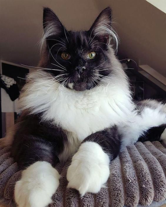 Click the photo for more adorable cat videos catvideos