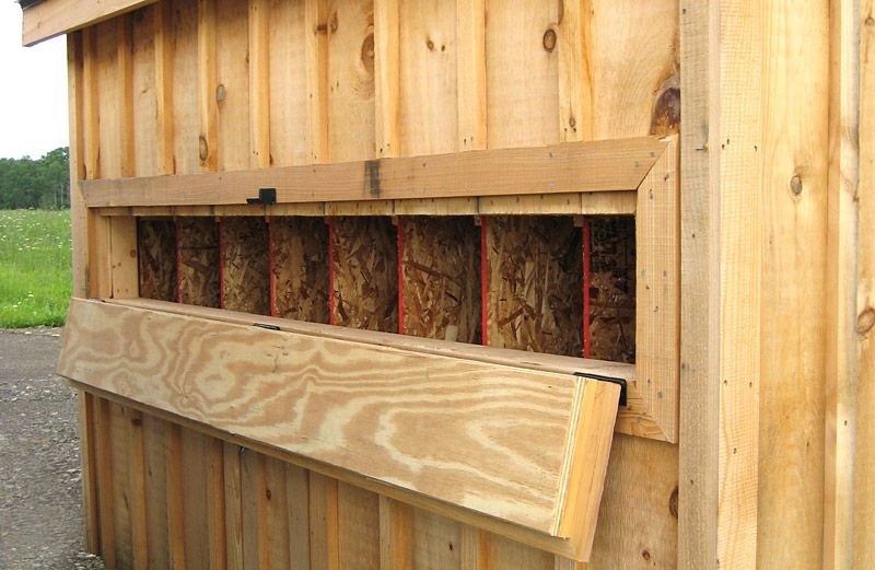 Inside chicken coops all coops come standard with for Chicken coop interior designs