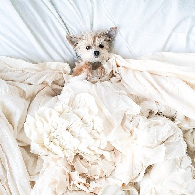 Not the only one loving this #anthropologie duvet