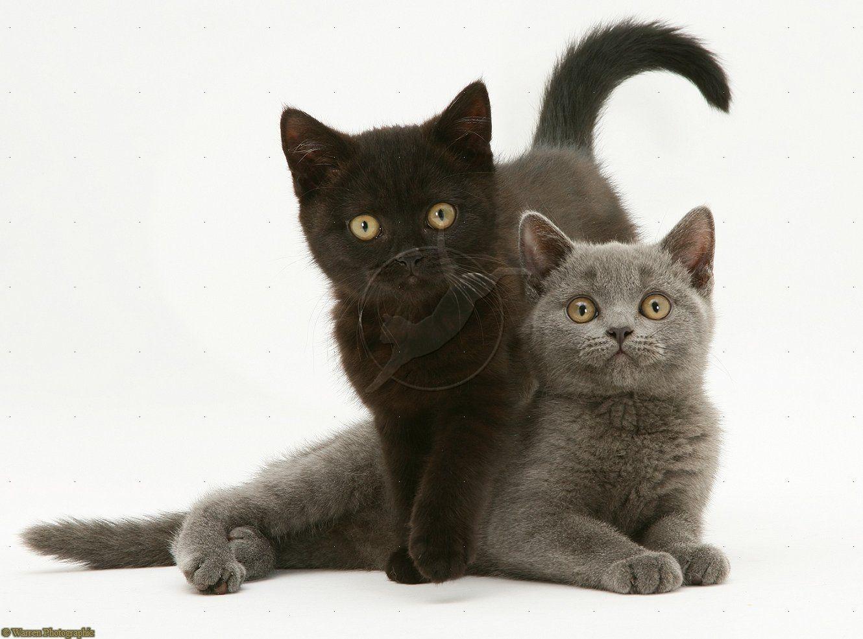 Adopt a grey/black kitten. Soccer Mom Schedule
