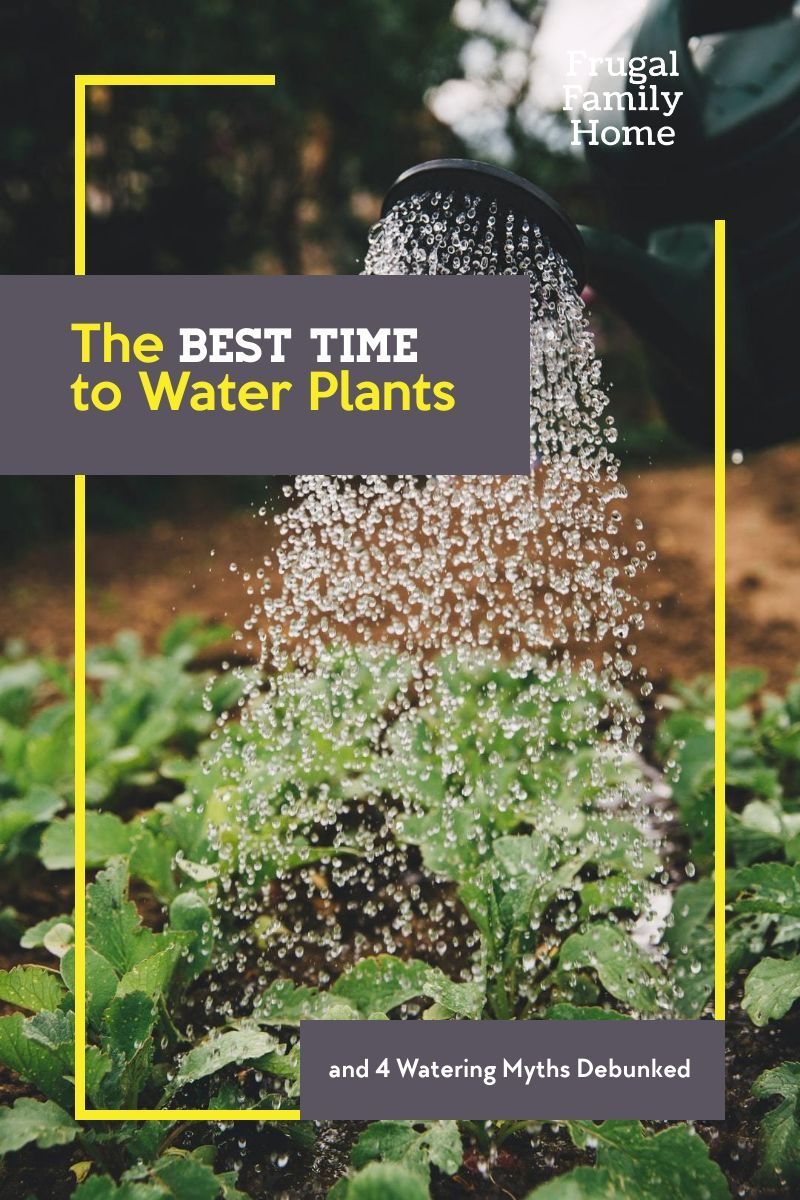 2cbd08824a8deba99dc401511b729d85 - When Is The Best Time For Gardening