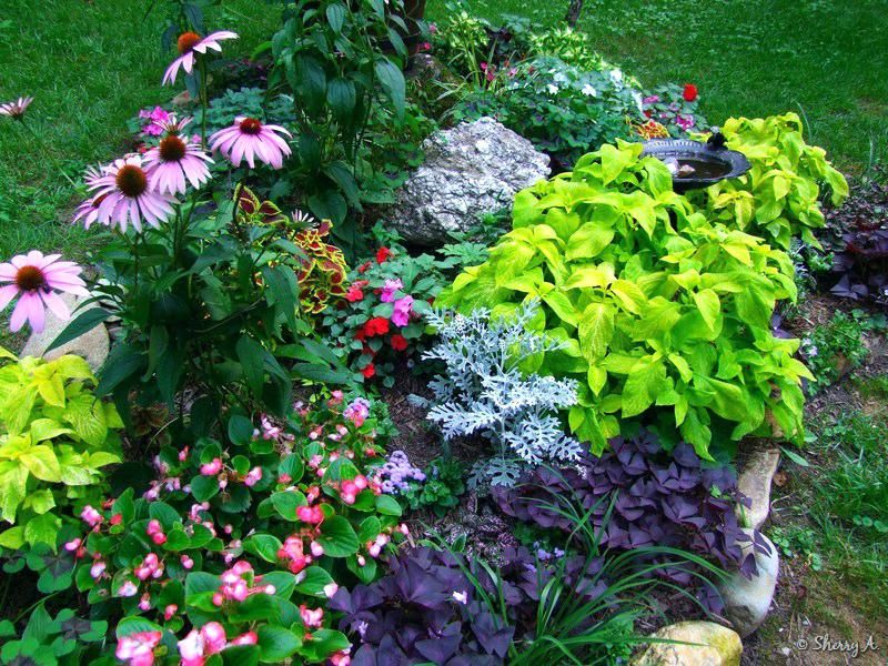 Small Perennial Garden Layout Flower Garden Plans Garden