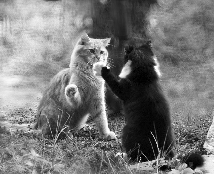 Zdarova, hermano :) - Gatos - Angelb