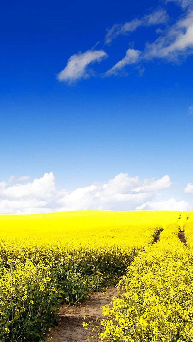 Nature Wonder Canola Field iPhone 5s Wallpaper