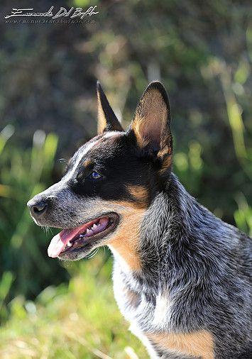 Emanuele Del Bufalo Pet Photography Crono Dog Breeds Best