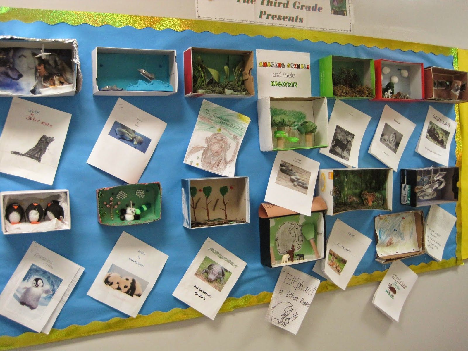 Animal Habitat Reports Dioramas