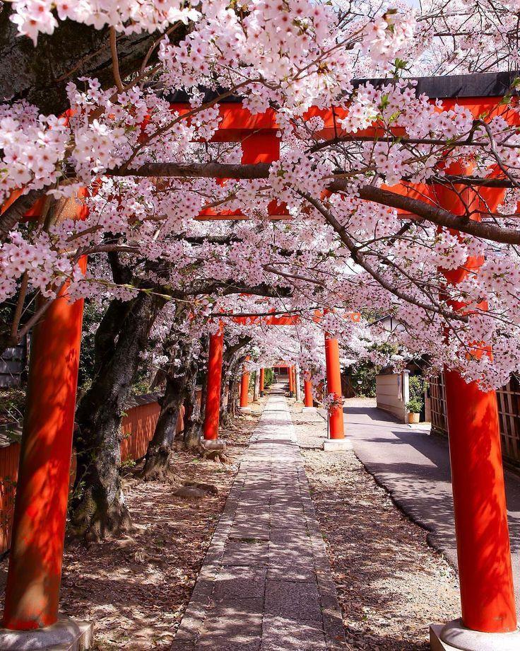 Japan Sakura Cherryblossom Cherryblossomjapan Cherryblossom Cherryblossomjapan Japan Japan Landscape Aesthetic Japan Japan Photo