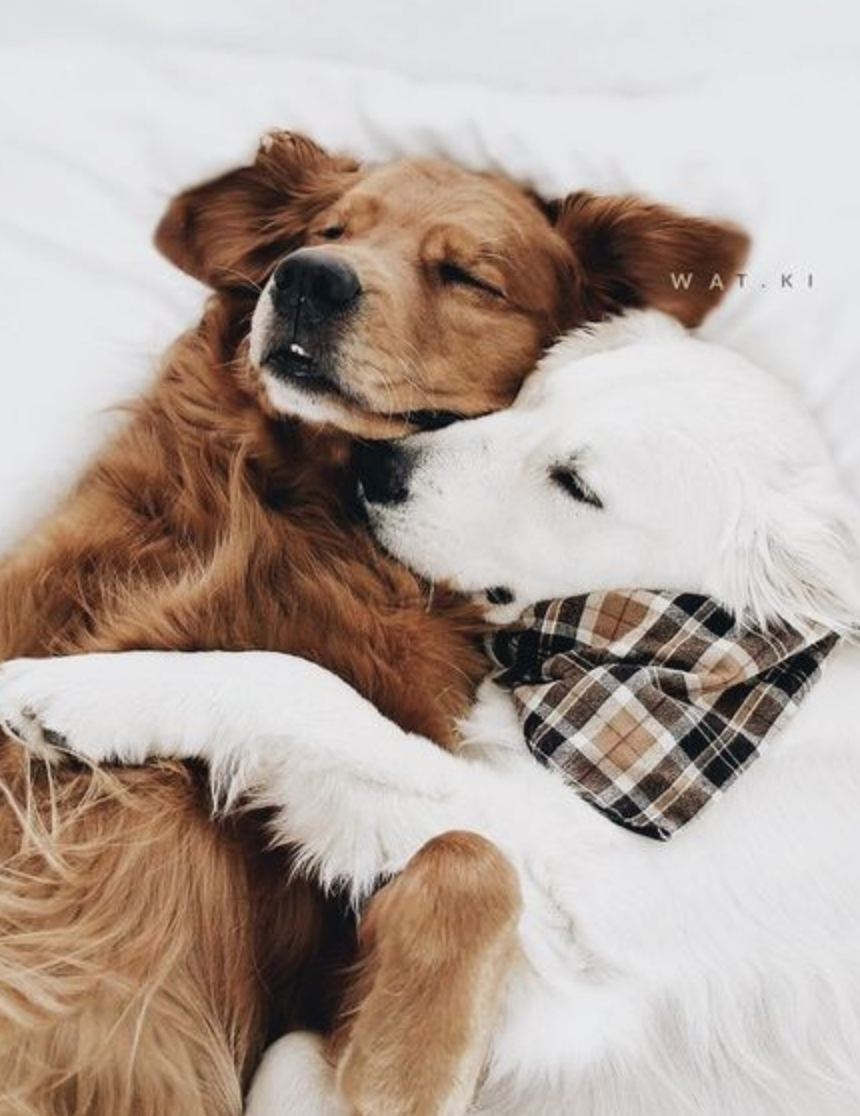 Pin by evan bailey on fluffies pinterest animal dog and pup