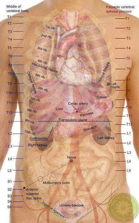 Pin By Darlene Lohner On Health Pinterest Reflexology Anatomy