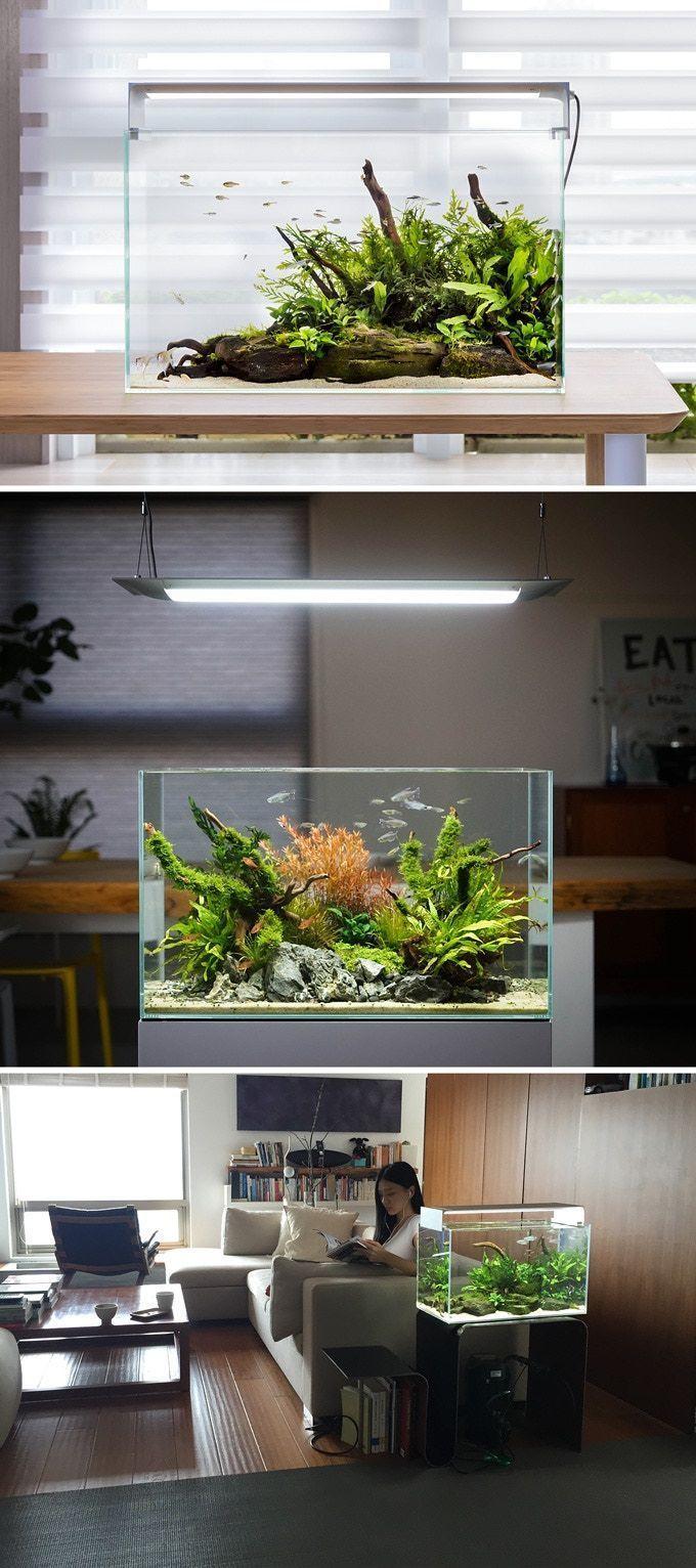 Piante Da Appartamento Per Acquario.Flat One The World S Smartest Aquarium Lighting By Onf