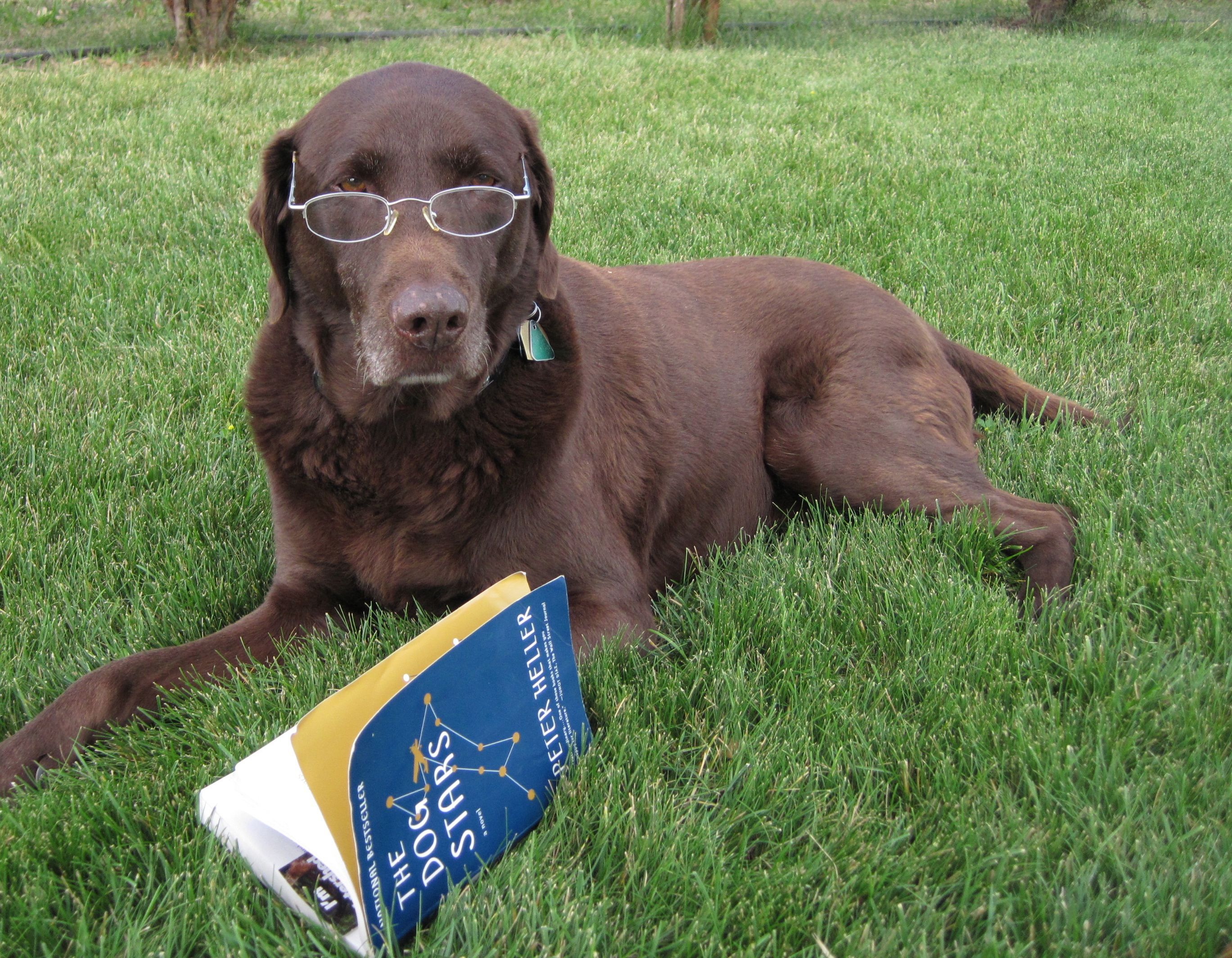 Dog Days Of Summer Evaluation Is An Everyday Activity Dogs Dog Days Summer Reading