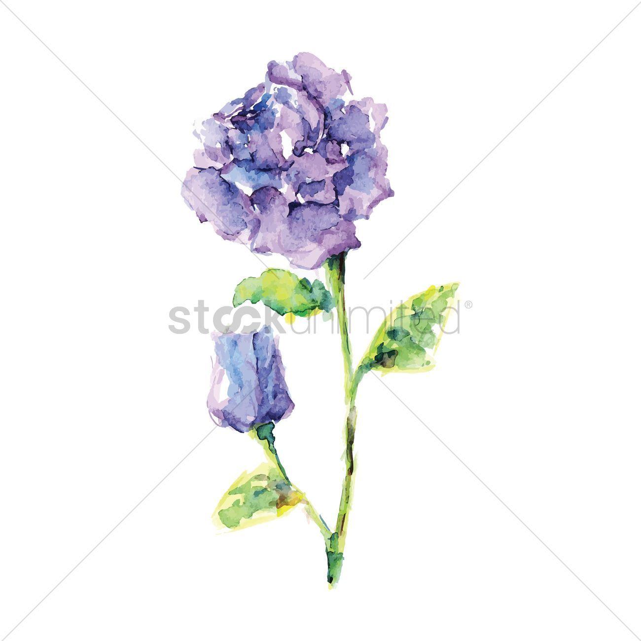 Peony flowers vectors stock clipart