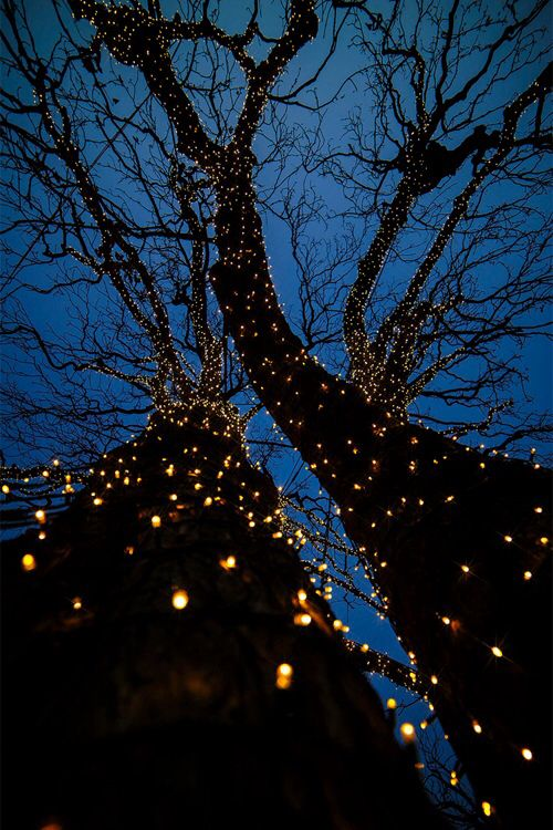 B U T T E R F L Y Lights Wallpaper Lighting Tree Lighting