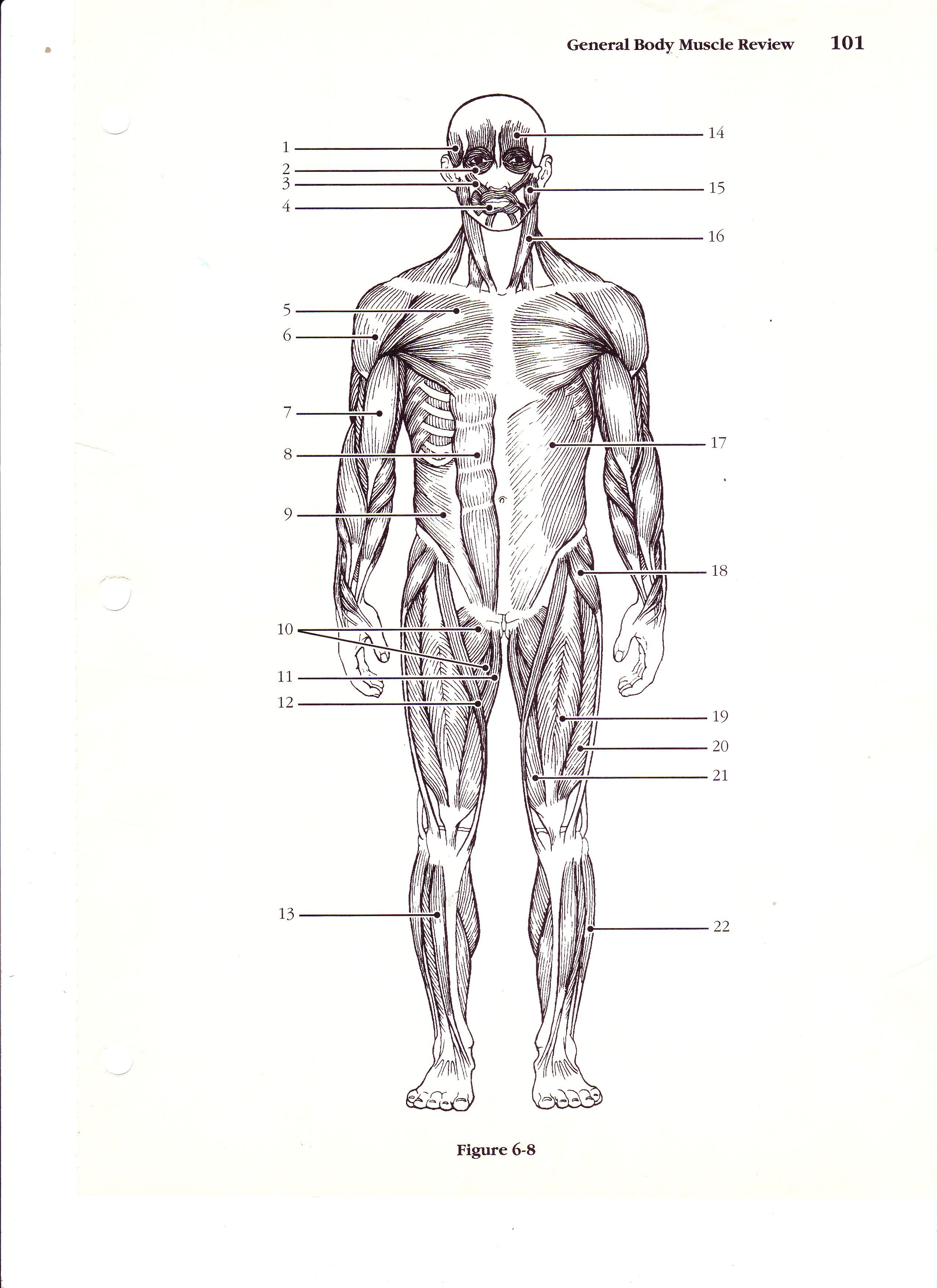 Label The Muscles Of The Body Worksheet
