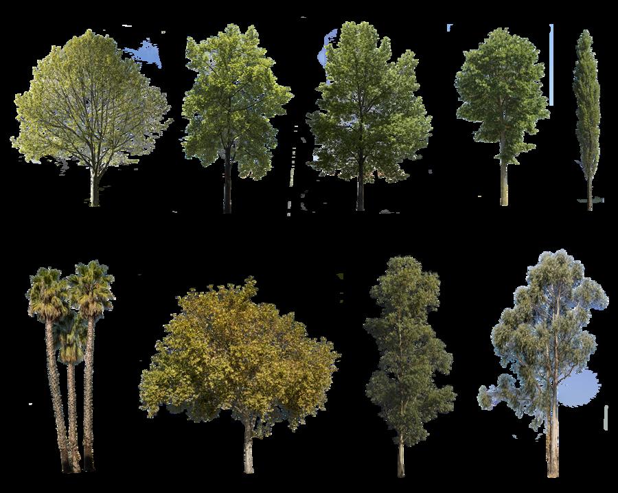 28 diverse trees pack in 2020 | Tree, Landscape, Landscape ...