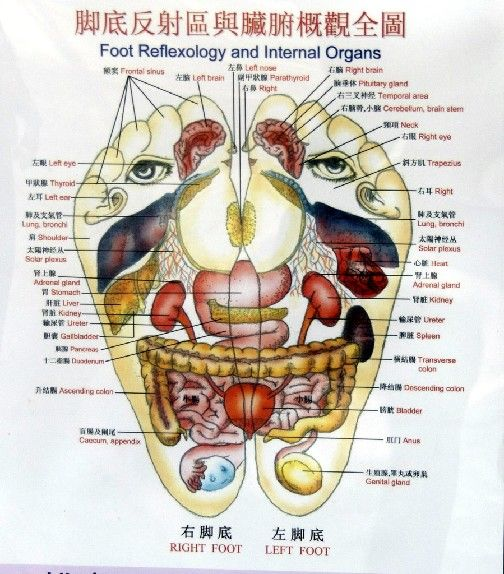 feet map of organs in body | ... to read the organ names. It is also ...