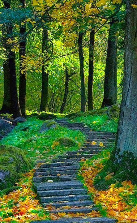 I Love Photos طبيعه خلابة Nature Forest Path Landscape
