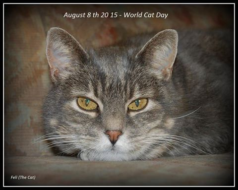 World Cat day 8 August