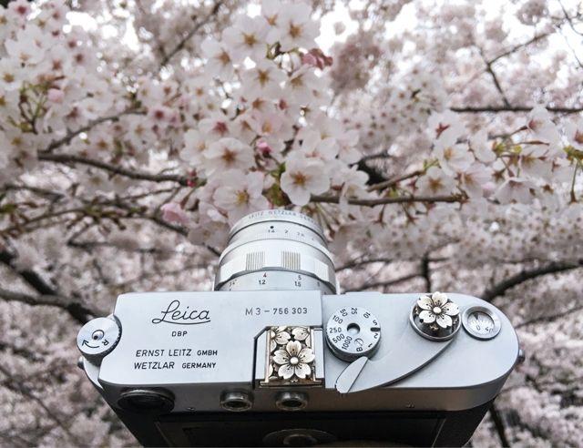 Sakura, Sakura, Sakura… and Sakura Leica (^з^)-☆Handcrafted by Jay Tsujimurahttp://www.shopjay.com/products/detail.php?p