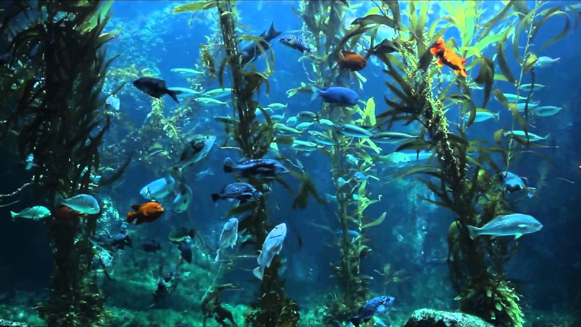 3 HOURS of Relaxing Aquarium Fish Coral Reef Fish Tank Full HD