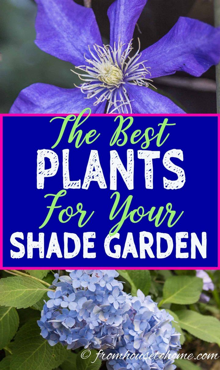 shade garden #gardencare Looking for plants to grow in shade outdoors This list of shade-loving shrubs and perennials that have beautiful flowers will really help you create a beautiful backyard landscape. #fromhousetohome #ShadePerennials #ShadeGarden #Landscaping