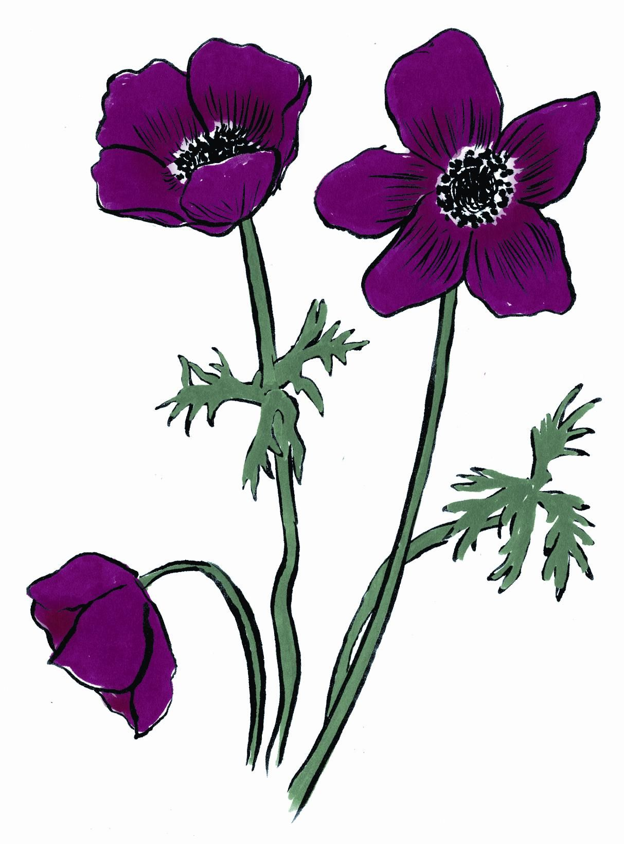 Anemone (Anemone): Forsaken  Their name comes from the Greek