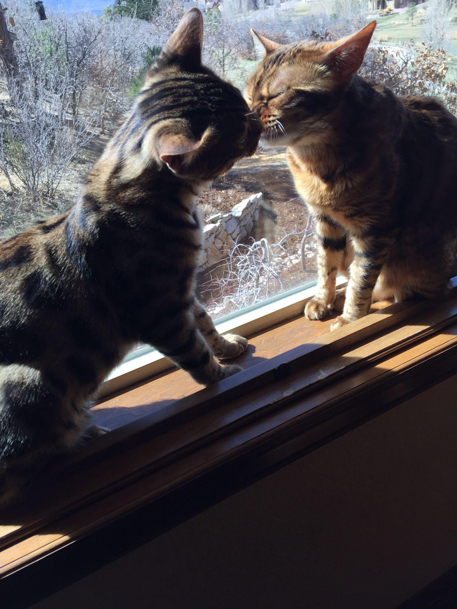 Princess Luna and Nova having a kiss!! So sweet