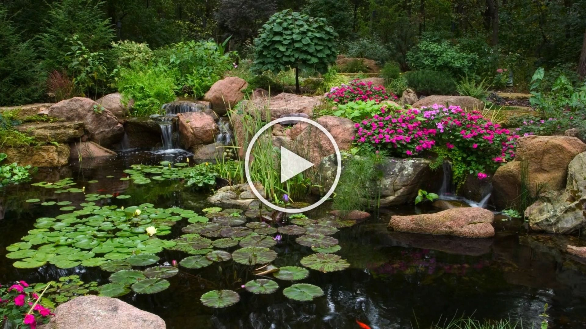 Landscapedesign Backyardideas Watergarden Blissful Koipond Garden Enjoy Water Video This Pondenjoy This Blissful Water Garden Video Ponds Backyard Aquatic Plants Water Garden