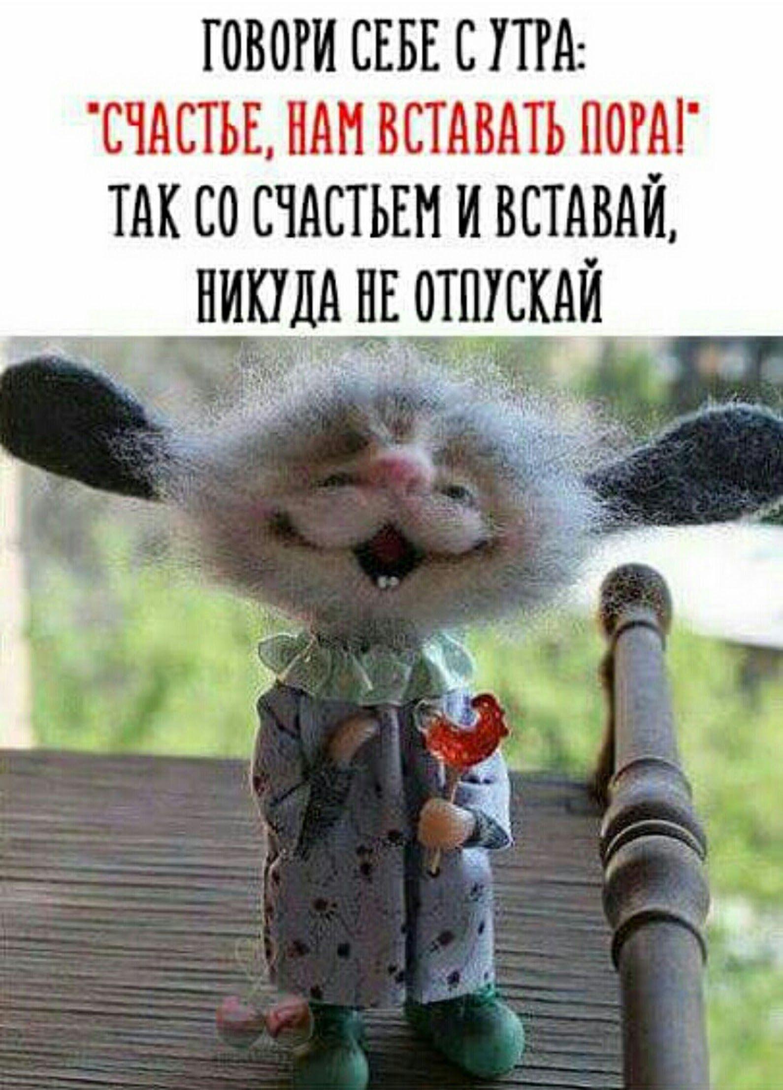 Доброго утра, с новым днем, новым счастьем, друзья ...