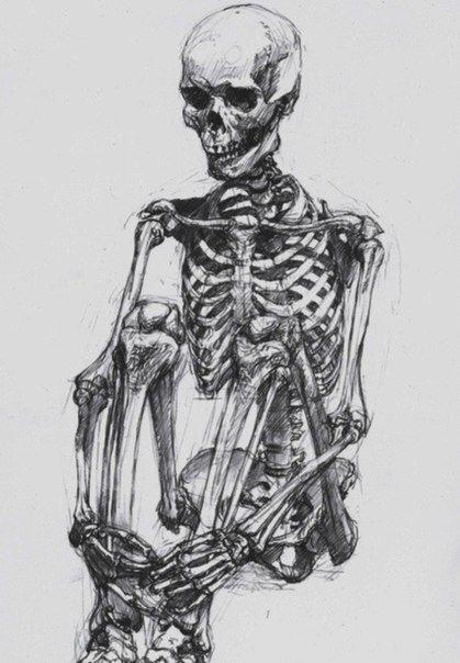 Новости | Изображения скелетов, Картинки с черепами ...