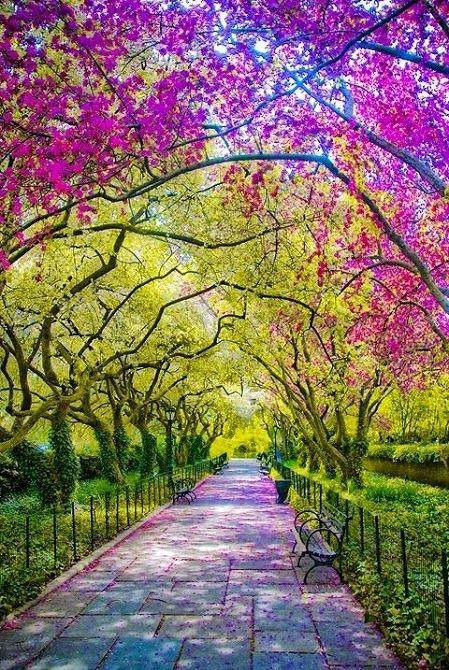 Central Park de Nueva York, EE.UU.  #eeuu #nuevayork