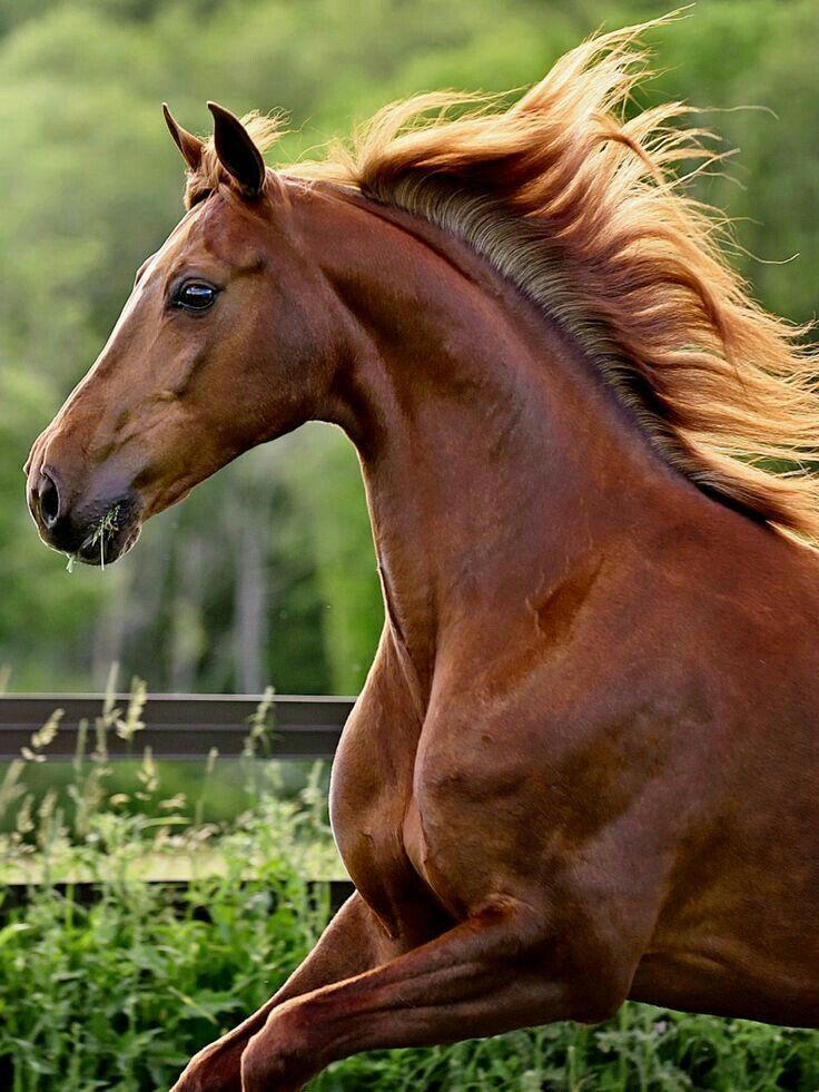 картинки животного лошадку исконно
