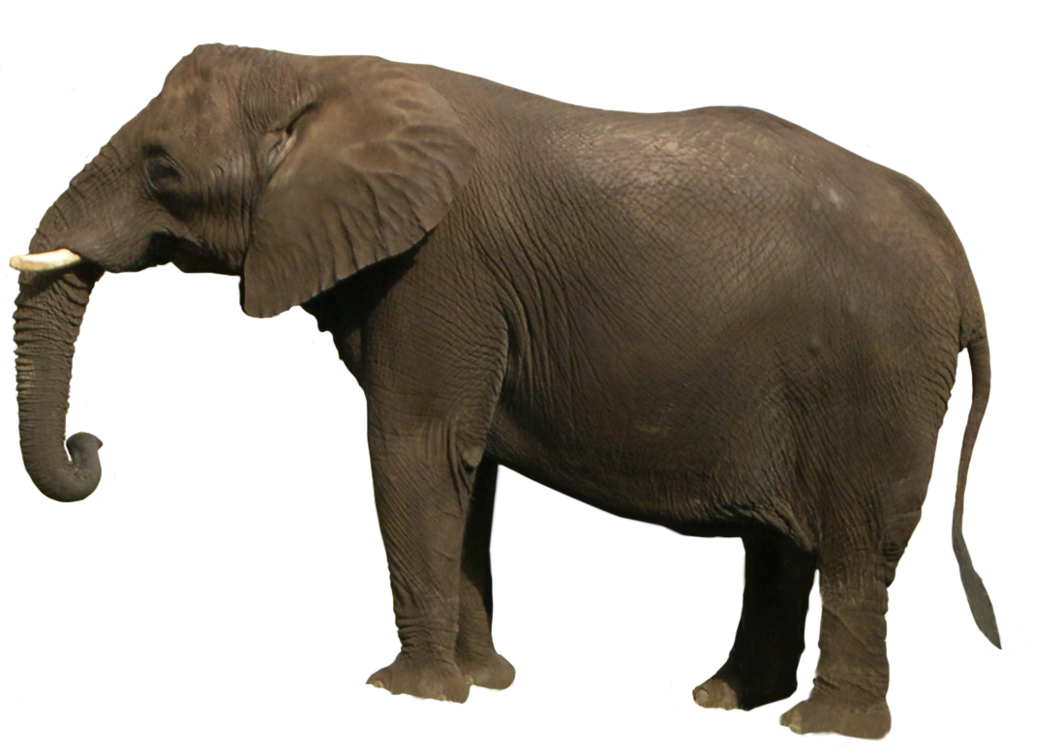 Elephant Png Face – Find over 100+ of the best free elephant face images.