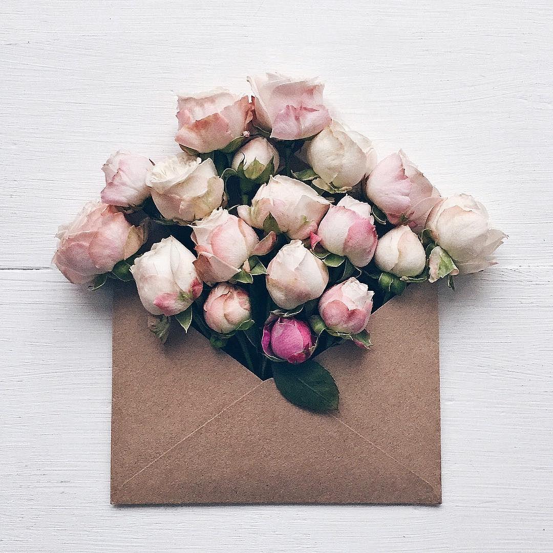 anna remarchuk, envelope & roses