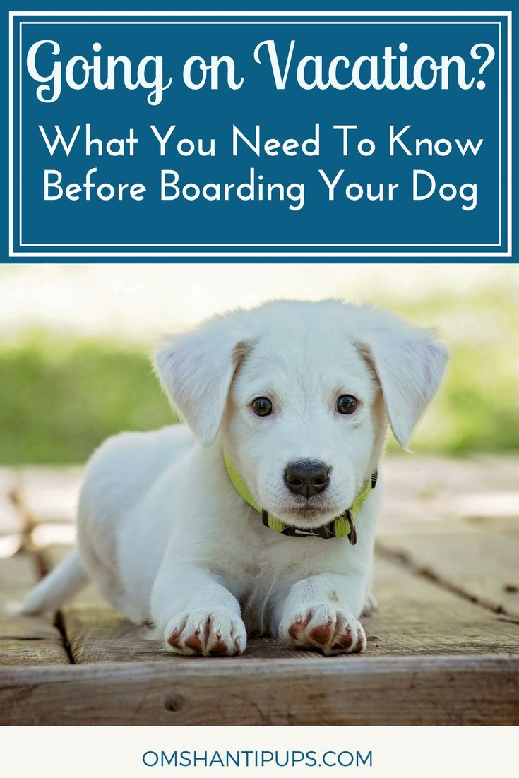 How to Care for a Dog Before, During, and After Pregnancy