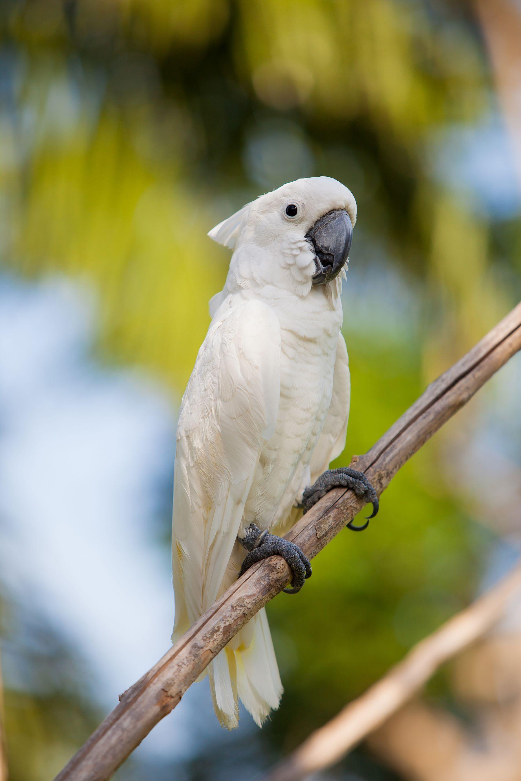 Branches Of White Parrots 52979 Parrot Bird Photo Pretty Birds