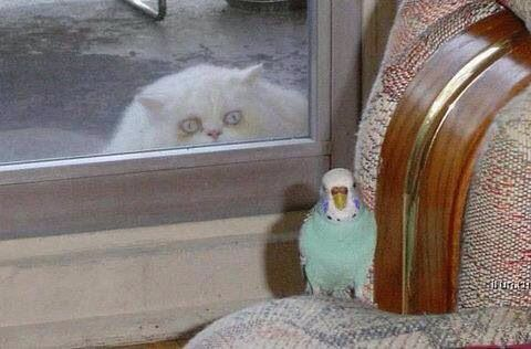 How much is that birdie in the window ?