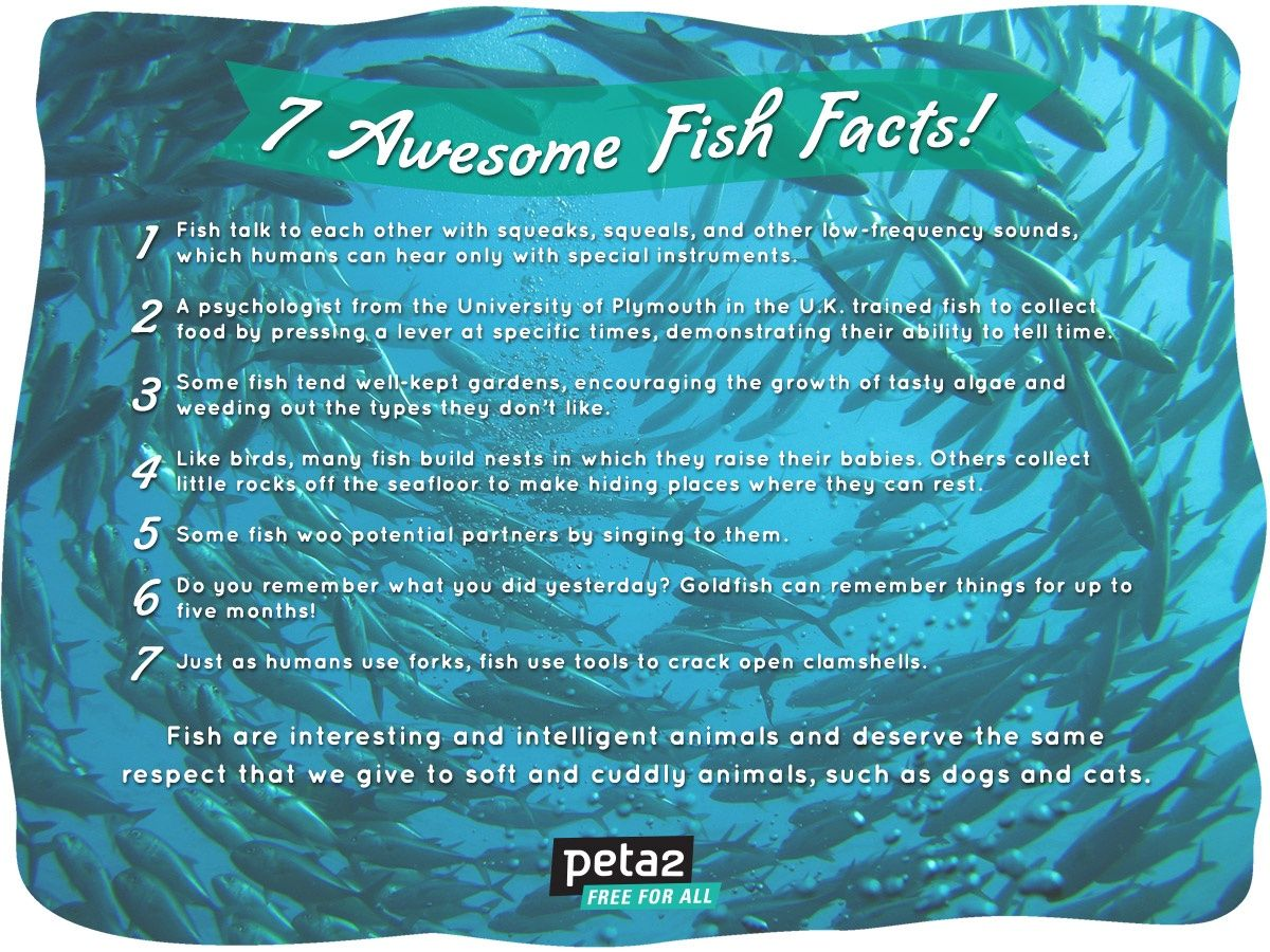 7 awesome fish facts fun fish facts pinterest for Interesting facts about fish