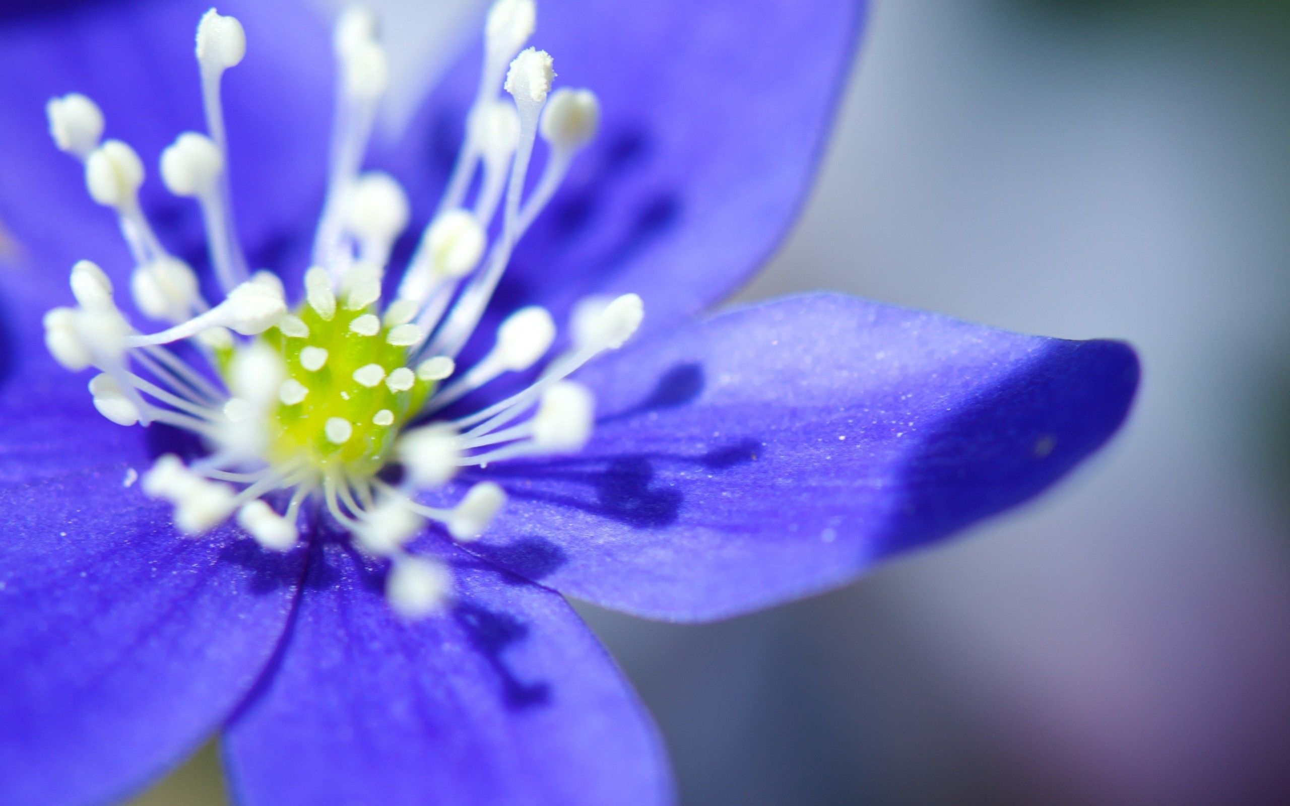 beautiful blue flowers ค้นหาด้วย Google Flores azuis