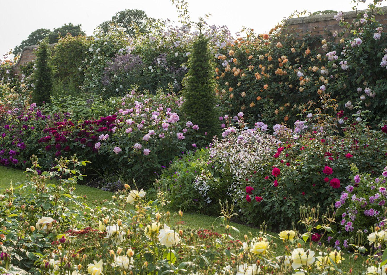 David Austin Roses Nursery In Shropshire By Gardenista