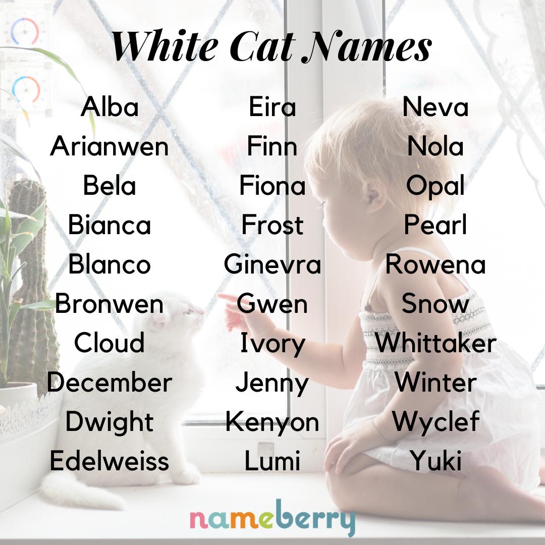 White Cat Names Cat Names Baby Names Cute Names