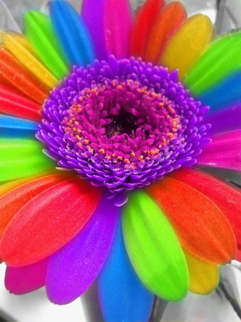 This Rainbow Flower Is Amazing3 Row Rrthg Pinterest