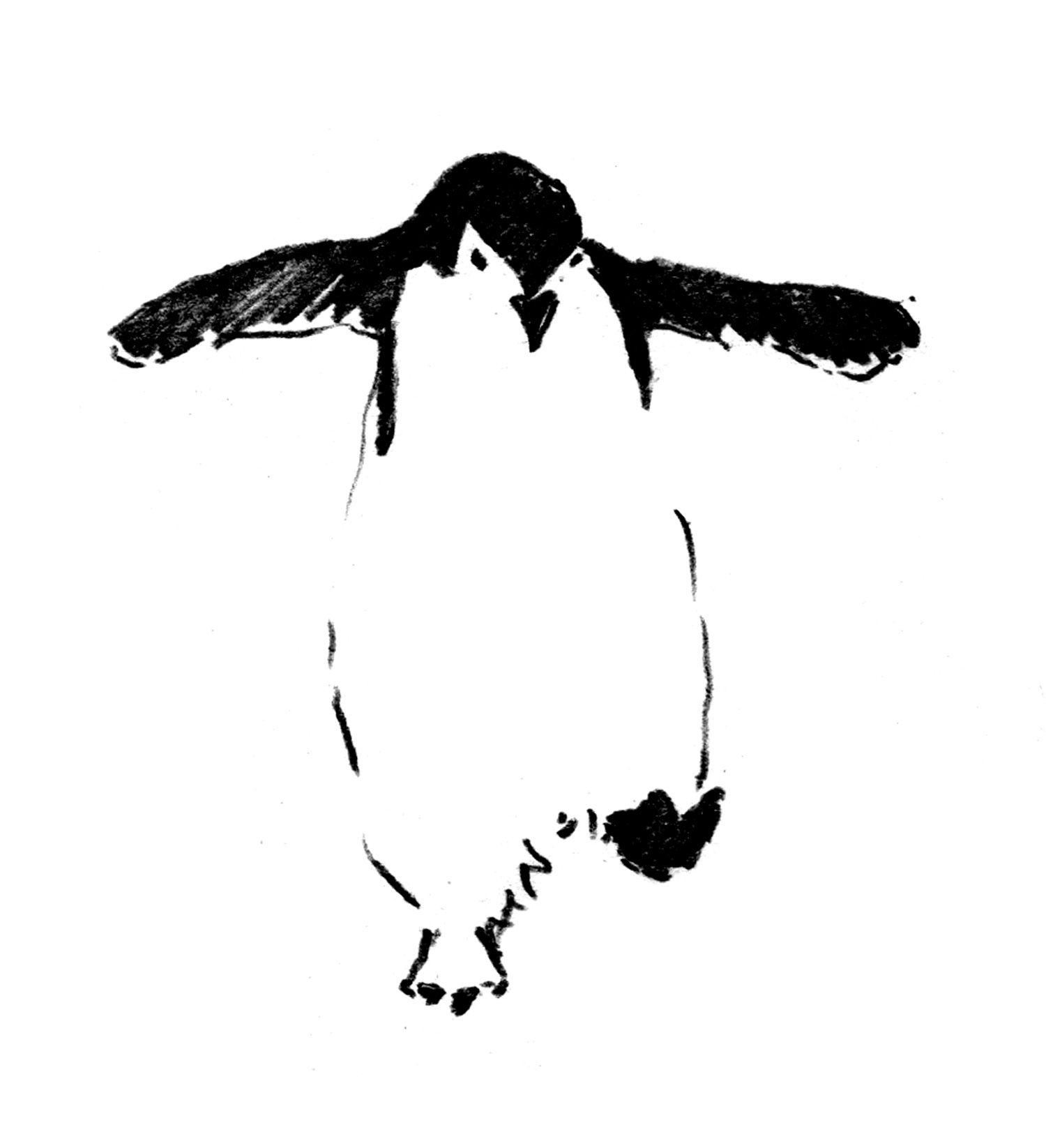 ペンギン #イラスト #ペンギン #アート #ドローイング #インク #ペン